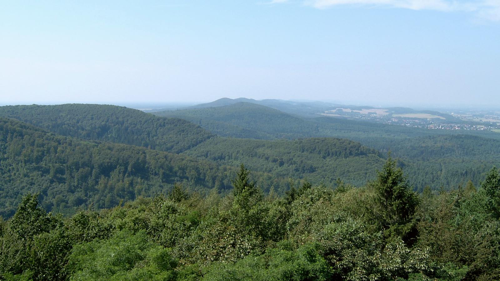 Forêt Mousel